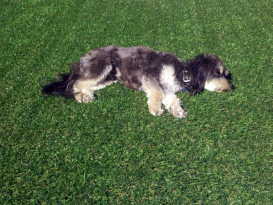 Artificial Grass Photos: Fake Turf Sheatown, Pennsylvania Dog Park, Grass for Dogs