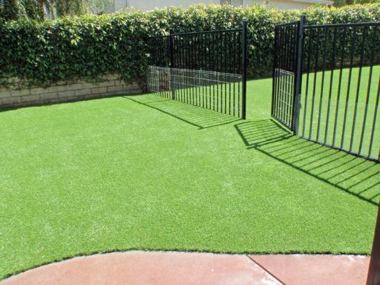 Artificial Grass Photos: Synthetic Grass Bryn Mawr, Pennsylvania Hotel For Dogs, Front Yard Landscape Ideas